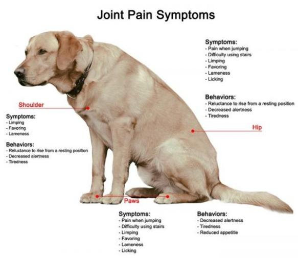 Dog Arthritis Signs